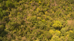 HD2008-8-15-44 StThomas gondola ride above trees Stock Video Footage