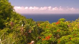 HD2008-8-15-46 StThomas trees ocean Stock Video Footage