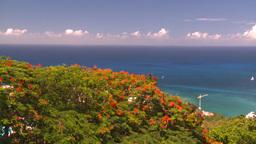 HD2008-8-15-48 StThomas trees ocean harbor Stock Video Footage