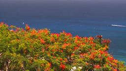 HD2008-8-15-56 StThomas trees ocean Stock Video Footage