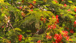 HD2008-8-15-62 StThomas trees Stock Video Footage