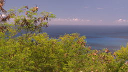 HD2008-8-15-64 StThomas trees ocean Stock Video Footage