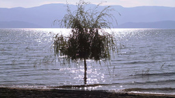Tree In Water Stock Video Footage