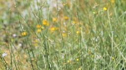 Wild Plants Footage
