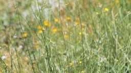 Wild Plants Stock Video Footage