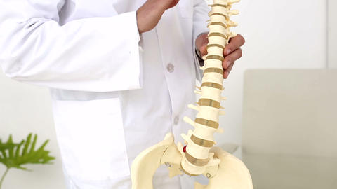 Chiropractor Showing Spine Model To Camera stock footage