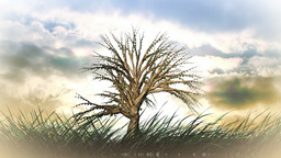 Tree Growing Fast Footage