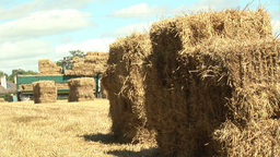 Summer harvesting Footage