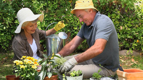Old couple gardening together Footage