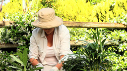 Mature woman potting plants in the garden Footage