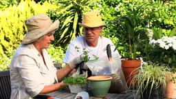 Happy mature couple potting plants Footage