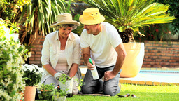 Mature couple spraying potted plants in garden Footage