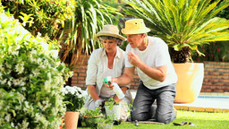 Senior couple gardening together Footage