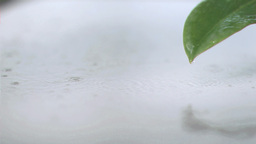 Raindrops in super slow motion Footage