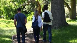 Three friends walk away in a park Footage