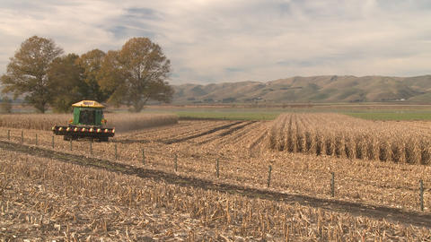 maize harvest timelapse Stock Video Footage