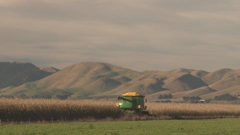 corn harvester long shot Stock Video Footage