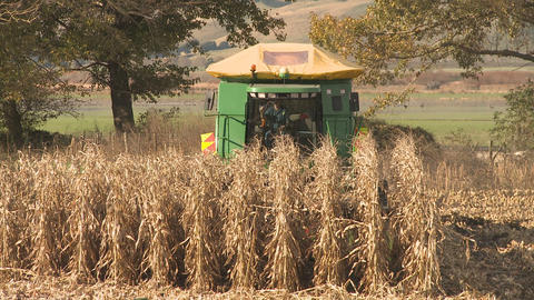 corn harvester front on Stock Video Footage