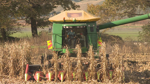 corn harvester front on Footage
