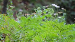 Forest vegetation Stock Video Footage