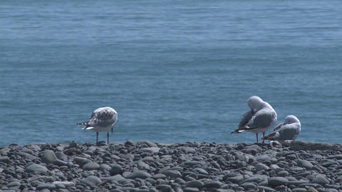 rack focus seagulls to cruise ship Stock Video Footage