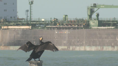 Oil tanker and cormorant seabird Stock Video Footage