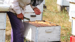 Beekeeper Footage