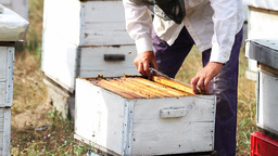 Beekeeper Stock Video Footage