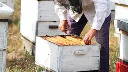 Beekeeper Stock Video Footage