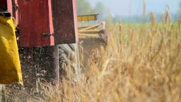 Combine Harvesting Stock Video Footage