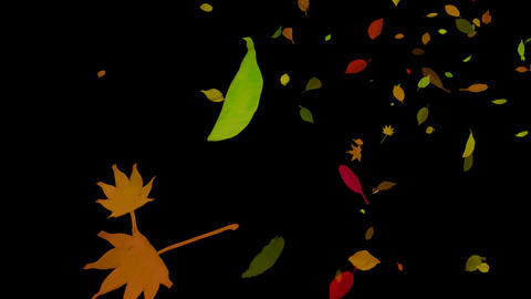 AutumnCG TYPE04HD mov alphachannel Animation