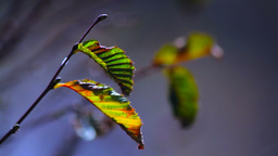 Tree Leaves Stock Video Footage