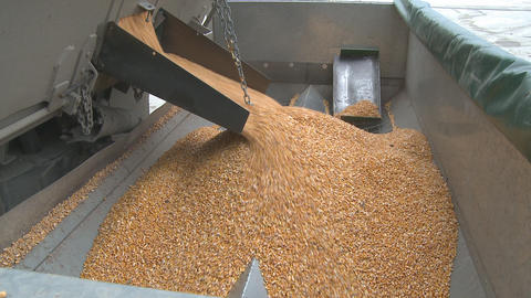 maize wide hopper Footage