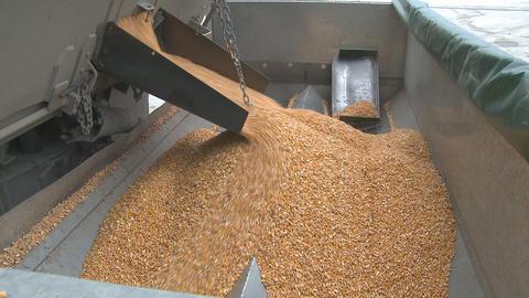 maize wide hopper Stock Video Footage