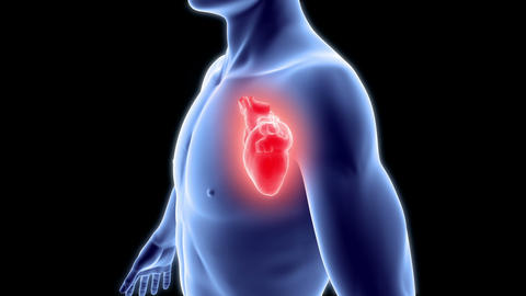 Human body with heart Animation