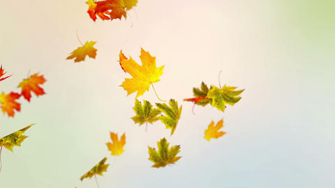 Colorful Autumn Stock Video Footage