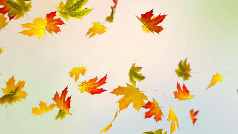 Colorful Autumn Animation
