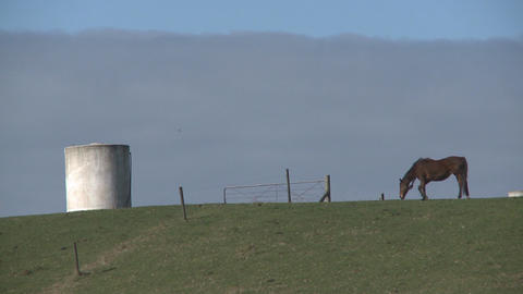 horse on a hill Stock Video Footage