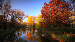 Vivid Colors Autumn Scenery Footage