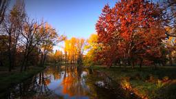 Vivid Colors Autumn Scenery Footage