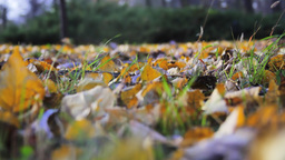 Fallen Leaves Stock Video Footage