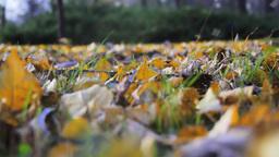 Fallen Leaves Footage