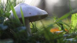 Mushroom Stock Video Footage