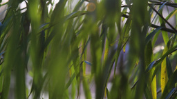 Weeping Willow Detail Stock Video Footage
