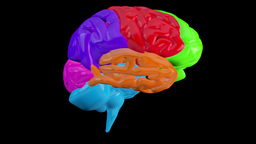 Revolving brain with highlighted sections Animation