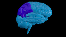 Revolving blue brain with highlighted sequenced se Animation