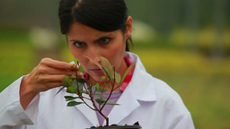 Woman inspecting plant Live Action