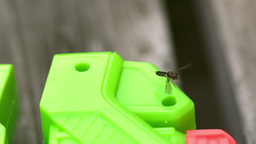 Insect flying around a toy Footage