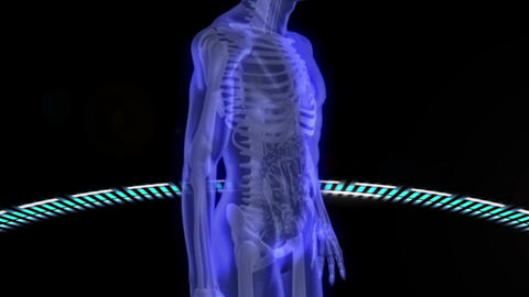 Virtual human body scan Animation