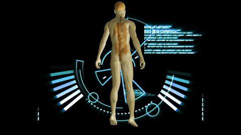 Revolving human form showing organs Animation